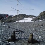 Sealions and Antenna