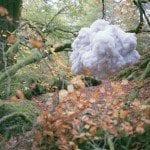 Dartmoor Hiding © Savannah Gordon