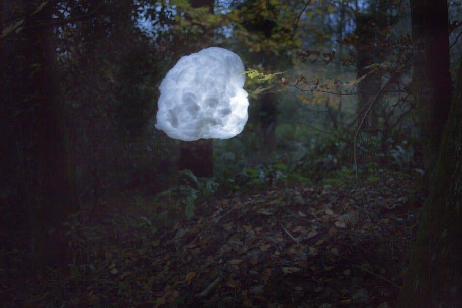 Into The Woods © Savannah Gordon