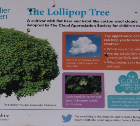 CAS Lollipop Information Sign