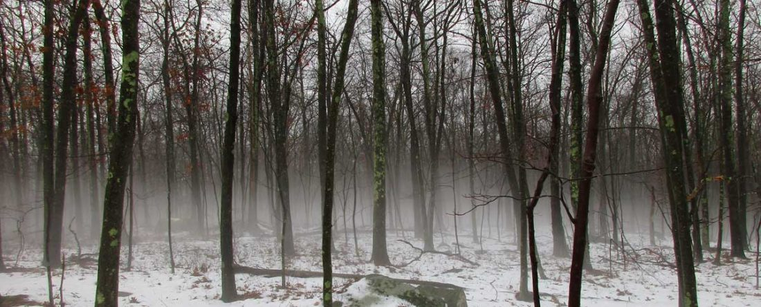 Fog along the Shenipsit Trail in Glastonbury, Connecticut, US, by Dennis Paul Himes (Member 5003).