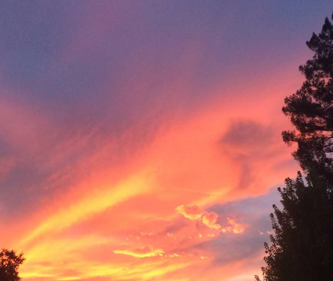 IMG_4992_PurpleRose Sunset