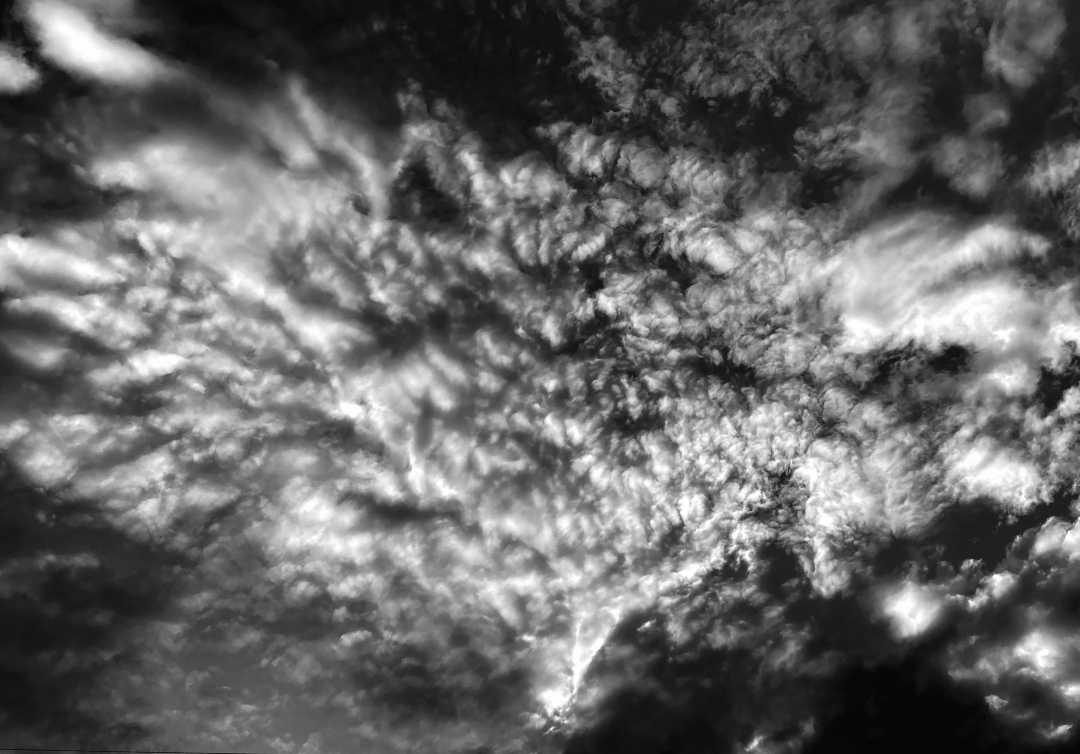 IMG_1626_BW_Bird's Eye View Of A Bird Below